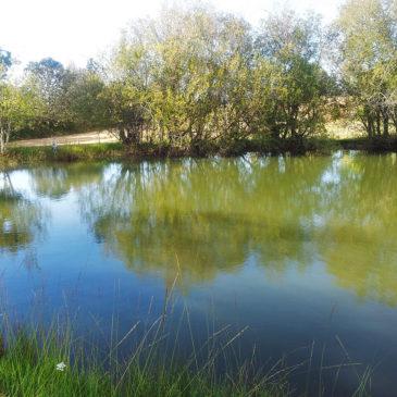 La pêche au bord de notre étang